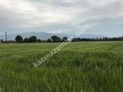 Orhangazi Gürle Köyünde Tarıma Uygun Satılık Tarla 16