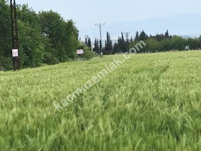 Orhangazi Gürle Köyünde Tarıma Uygun Satılık Tarla 18
