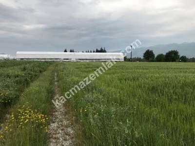 Orhangazi Gürle Köyünde Tarıma Uygun Satılık Tarla 17