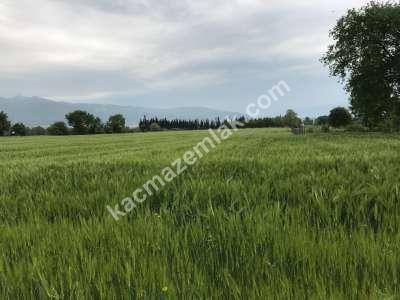 Orhangazi Gürle Köyünde Tarıma Uygun Satılık Tarla 14