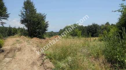 Orhangazi Yeniselöz Köyünde 4.800 M2 Acil Satılık Tarla 14