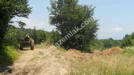 Orhangazi Yeniselöz Köyünde 4.800 M2 Acil Satılık Tarla 2