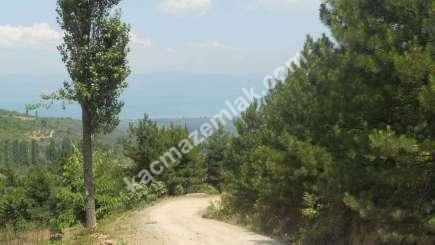 Orhangazi Yeniselöz Köyünde 4.800 M2 Acil Satılık Tarla 11