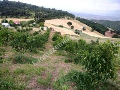 Bursa İli Yenişehir Beypınar Köy Yatırımlık Tarla(Opsiy 2