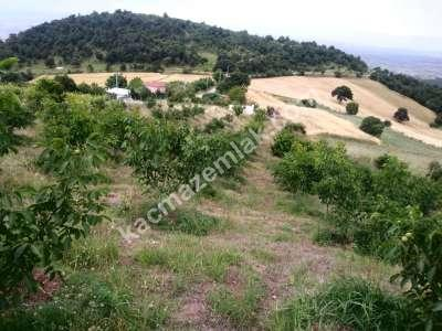 Bursa İli Yenişehir Beypınar Köy Yatırımlık Tarla(Opsiy 3