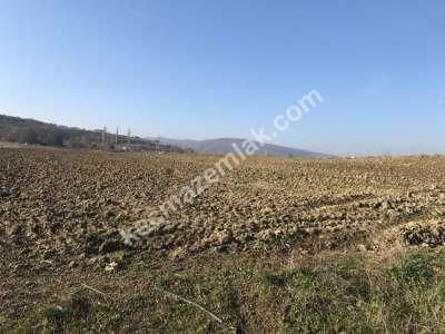 Yenişehir Fethiye Köyü/Mah Satılık Arazi Tarla 3