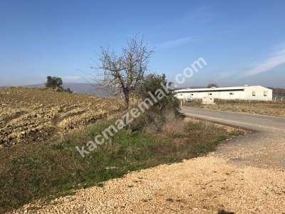 Yenişehir Fethiye Köyü/mah Satılık Arazi Tarla