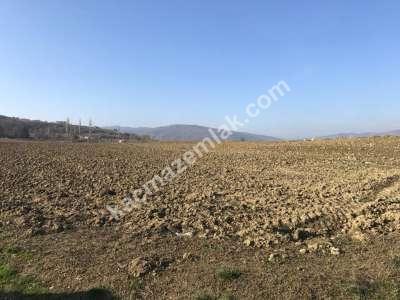 Yenişehir Fethiye Köyü/Mah Satılık Arazi Tarla 6