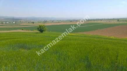 Yenişehir Bursa Yoluna 200 Mt Toprakocak Mh Sat Tarla 8