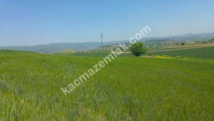 Yenişehir Bursa Yoluna 200 Mt Toprakocak Mh Sat Tarla 2