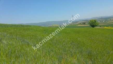 Yenişehir Bursa Yoluna 200 Mt Toprakocak Mh Sat Tarla 12