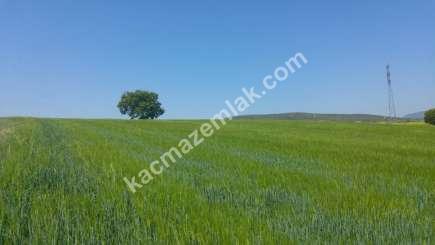Yenişehir Bursa Yoluna 200 Mt Toprakocak Mh Sat Tarla 3