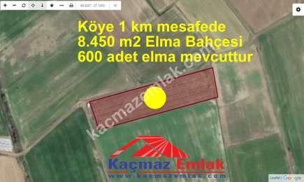 Biga Geyikkırı'nda Satılık 8.500 M2 Elma Bahçesi 1