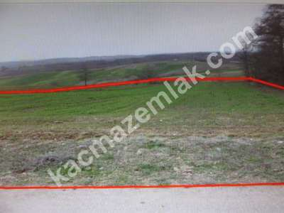 Diyarbakır Urfayolu Pirinçlik Te Satılık 11.500.dönüm M 4