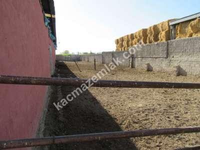 Develi Soysallı Köyü Yolunda Çiflik 3
