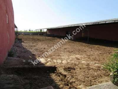 Develi Soysallı Köyü Yolunda Çiflik 7