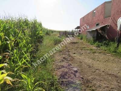 Develi Soysallı Köyü Yolunda Çiflik 19