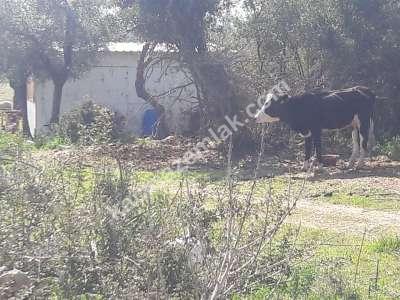 Seyrantepe De Satılık Arsa Doğa Manzaralı 1