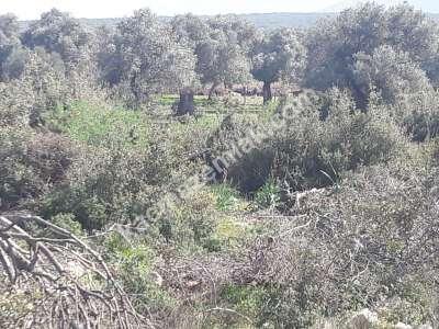 Seyrantepe De Satılık Arsa Doğa Manzaralı 2