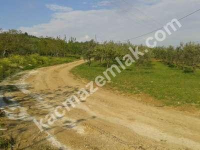 Mudanya Akköy De Acil Satılık Arazi. 1