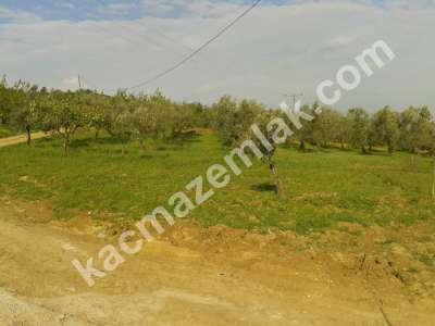 Mudanya Akköy De Acil Satılık Arazi. 2