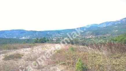 Bursa Mudanya Dere Köyde Acil Satılık Zeytin Bahçesi 4