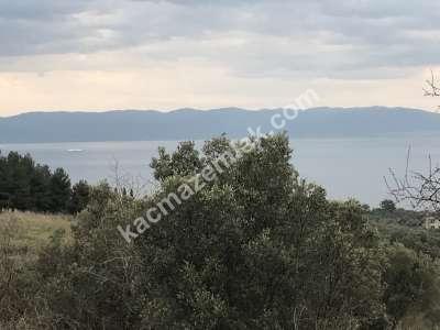 Mudanya Şükrüçavuş Mh Deniz Manzaralı Satılık Zeytinlik 18