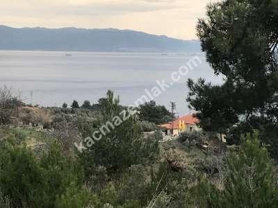 Mudanya Deniz Manzaralı İmara Yakın Satılık Zeytinlik 5