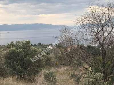 Mudanya Deniz Manzaralı İmara Yakın Satılık Zeytinlik 6
