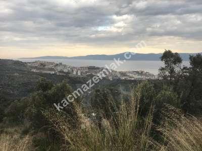 Mudanya Deniz Manzaralı İmara Yakın Satılık Zeytinlik 1