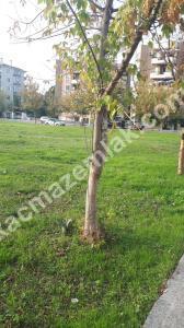 Nilüfer İlçe Cumhuriyet Mh. Satılık 3+1 Daire 15
